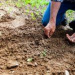 Home Gardening Made Easy-Saving Money and Benefits